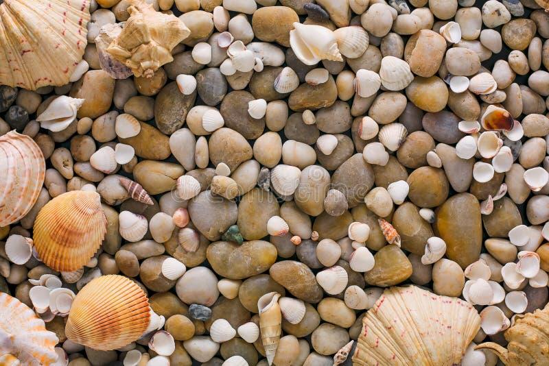 Seashells and pebbles background, natural seashore stones royalty free stock photos