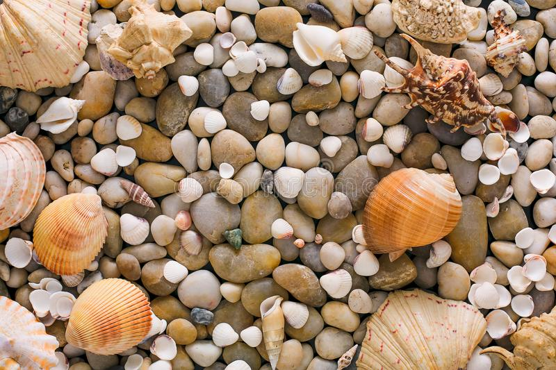 Seashells and pebbles background, natural seashore stones stock images