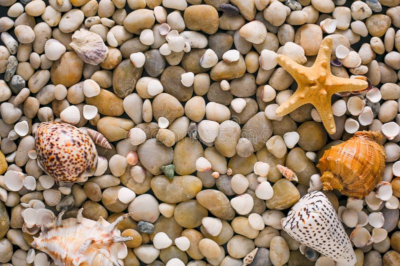Seashells and pebbles background, natural seashore stones royalty free stock images