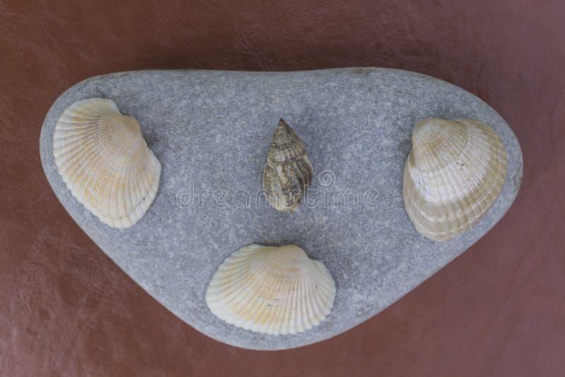 Seashells on pebbles brown background. Seashells pebbles on brown background stock photo