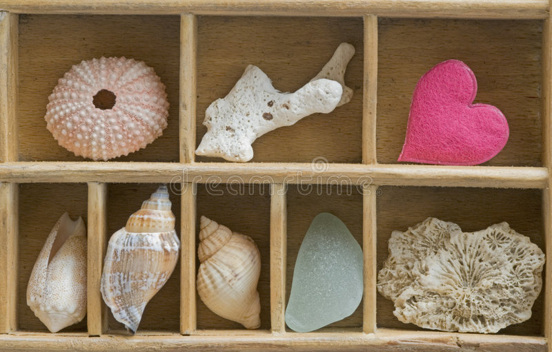 Download Seashells and Pink Heart stock image. Image of assortment - 3976331
