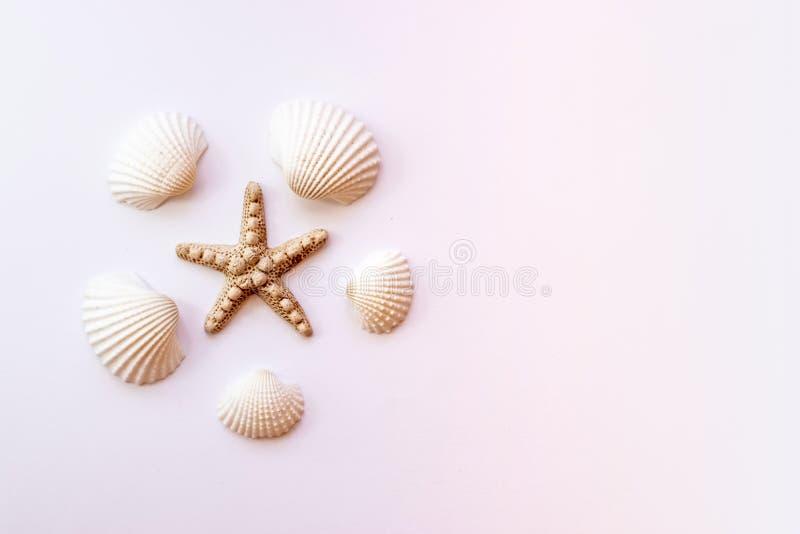 Seashells, rozgwiazda na pastelowych menchii tle poj?cia t?a ramy piasek seashells lato Odg?rny widok, kopii przestrze? obraz stock