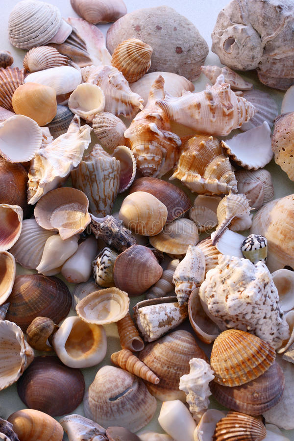 Download Seashells on the sand stock image. Image of life, outdoor - 12100729