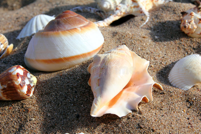 Seashells on sand stock image
