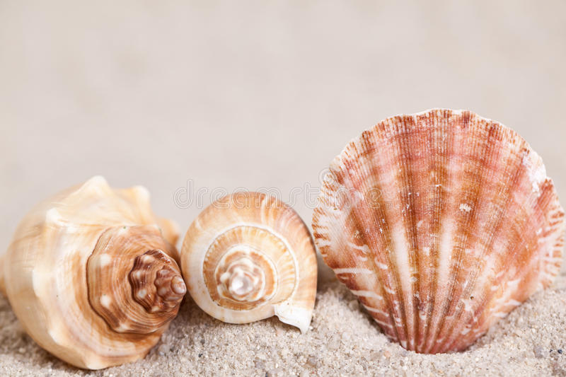 Seashells on sand stock photography