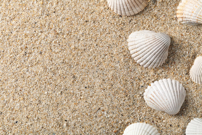 Seashells on the sand. With copy space royalty free stock photography
