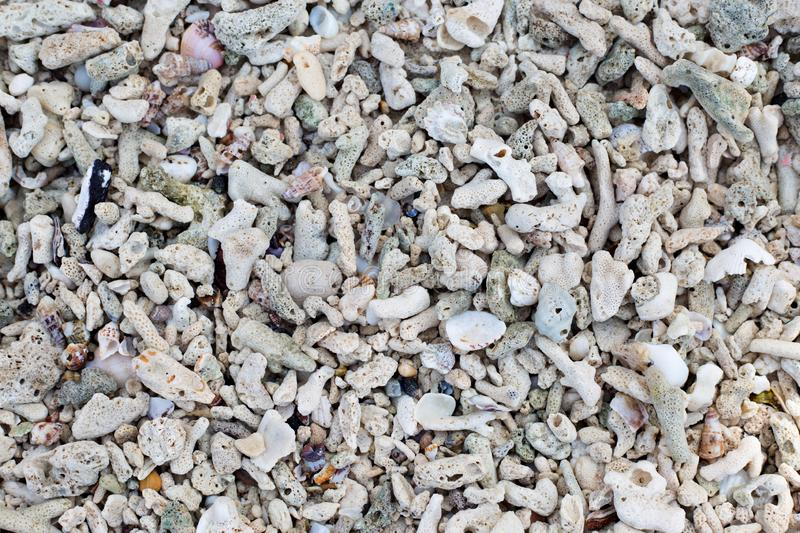 Seashells and sand background. Colorful shells. Beach texture. stock image