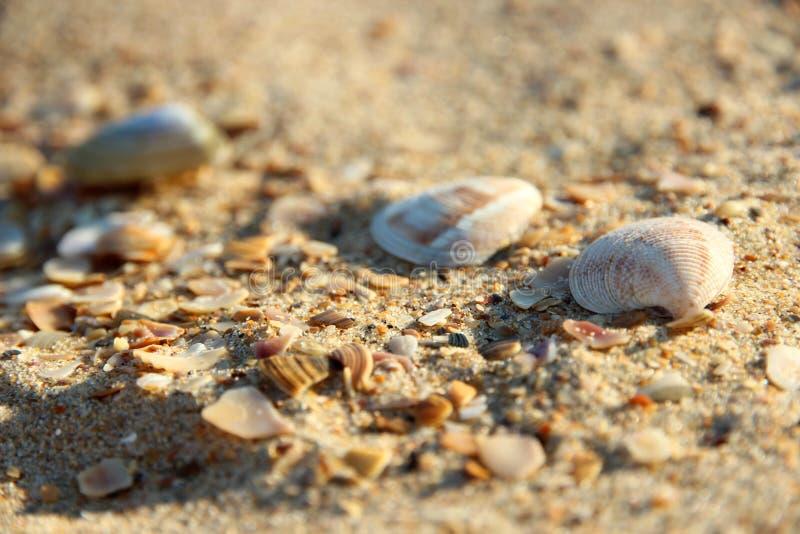 Seashells in the sand stock photo