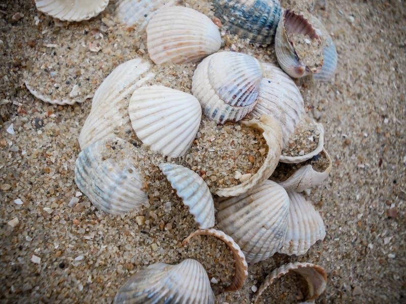 Seashells in the sand stock photos