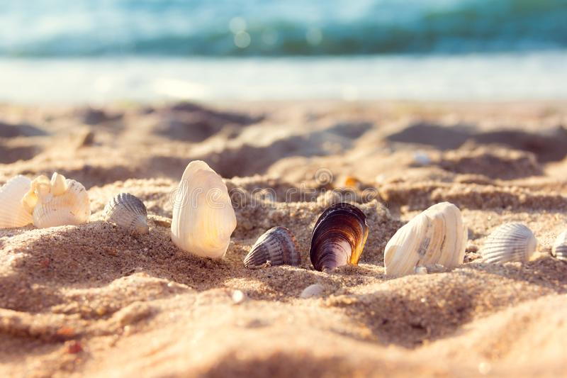 Seashells in the sand royalty free stock photos
