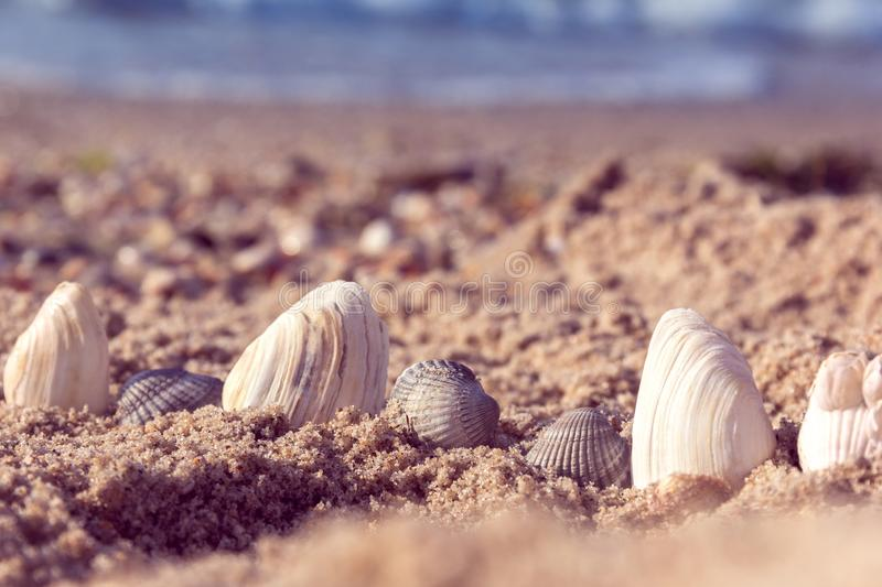 Seashells in the sand royalty free stock photo