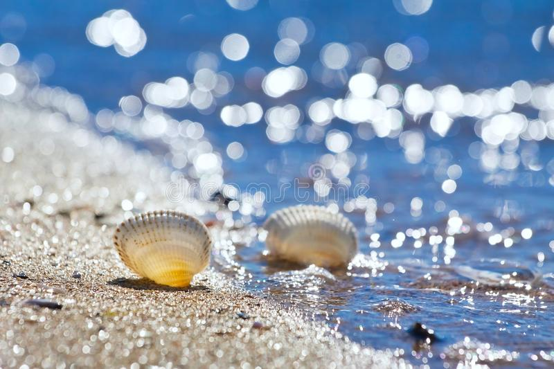 Seashells on a sand shore of Black Sea beach in backlight against deep blue clear sky, bright bokeh. Seashells on a sand shore of Black Sea beach in backlight stock photography