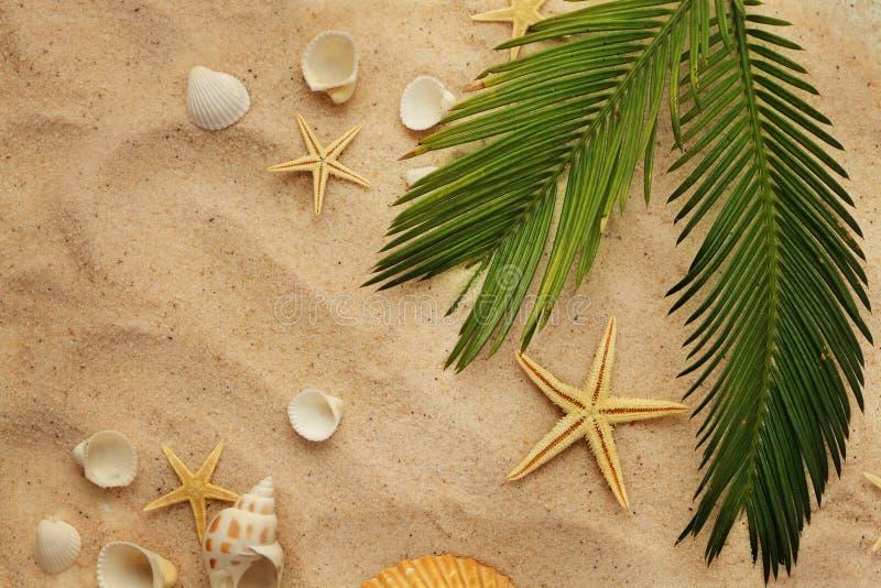 Seashells and sand royalty free stock photos