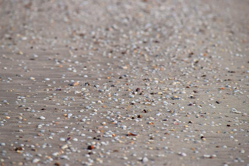 Seashells on Sandy Beach - Abstract Marine Background stock photography
