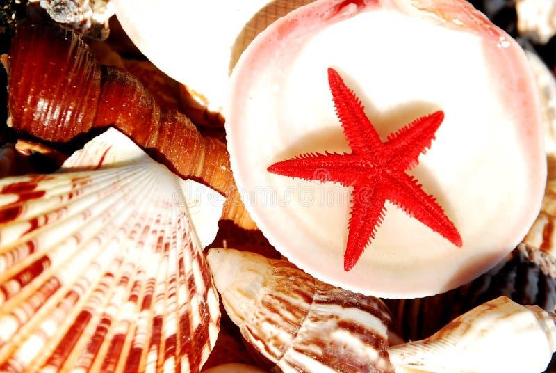 Seashells at the seashore. Seashells at the beach on a beautiful summer day royalty free stock images