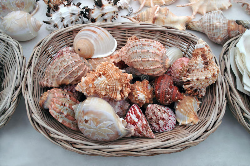 Download Seashells For Selling. Stock Photo - Image: 16785300