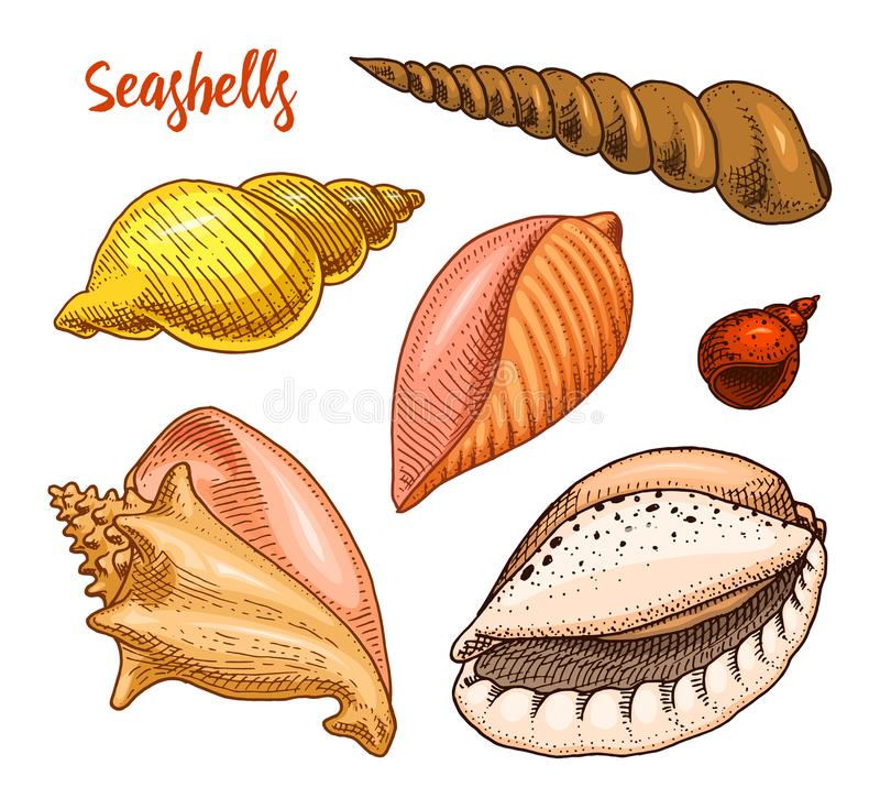 Seashells set or mollusca different forms. sea creature. engraved hand drawn in old sketch, vintage style. nautical or. Marine, monster or food. animals in the vector illustration