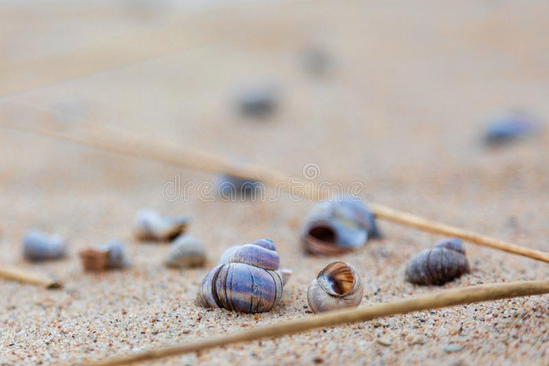 Seashells on the shore of the lake on the sand. Siberia stock images