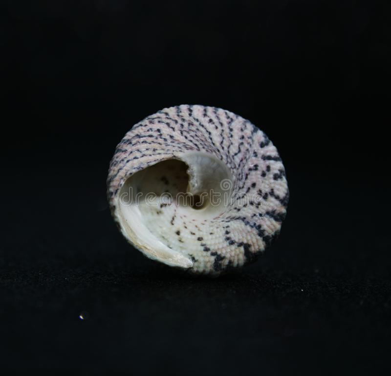 Seashells 6 zdjęcia stock