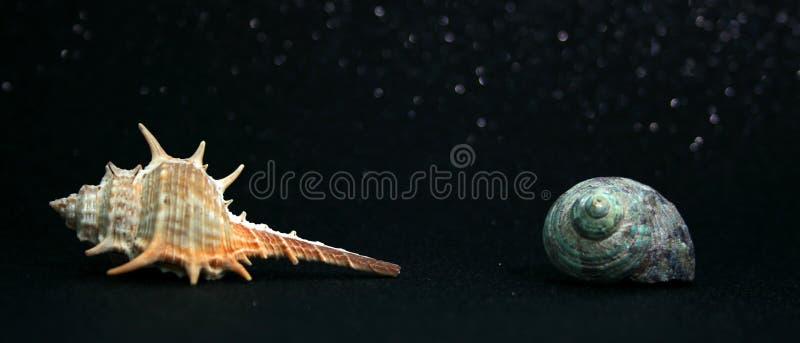 Seashells 6 zdjęcia royalty free