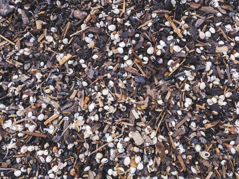 Seashells and small wooden pieces washed out on the beach. Shore royalty free stock image