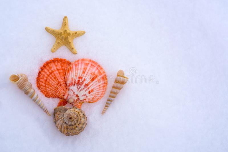 Seashells on the snow in the shape of a Christmas tree. The concept of Christmas holidays, memories of the sea, the expectations o stock image