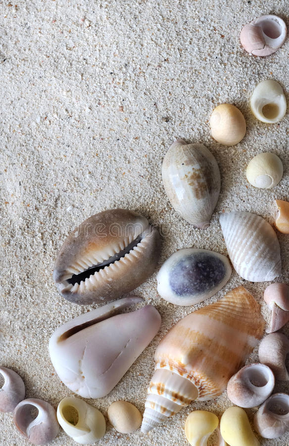 Seashells. Some pearly seashell in the sand stock photos