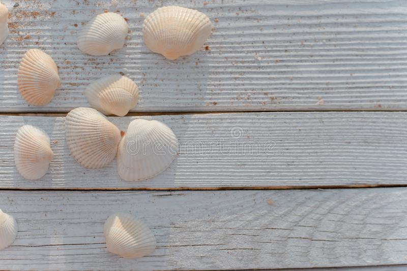 Seashells and some sand on wooden boards painted in white paint. stock photography