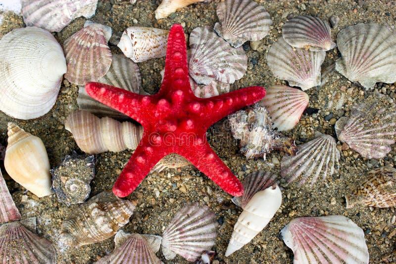 Seashells and starfish stock photos