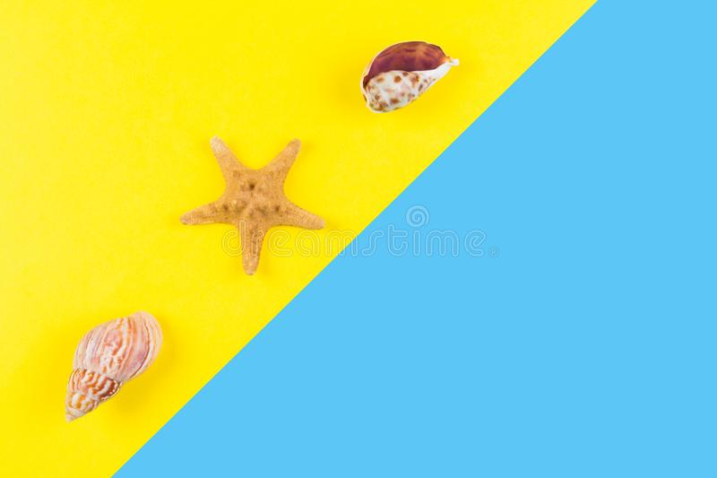 Seashells and starfish on blue and yellow background. Vacation, travel, summer concept stock photography