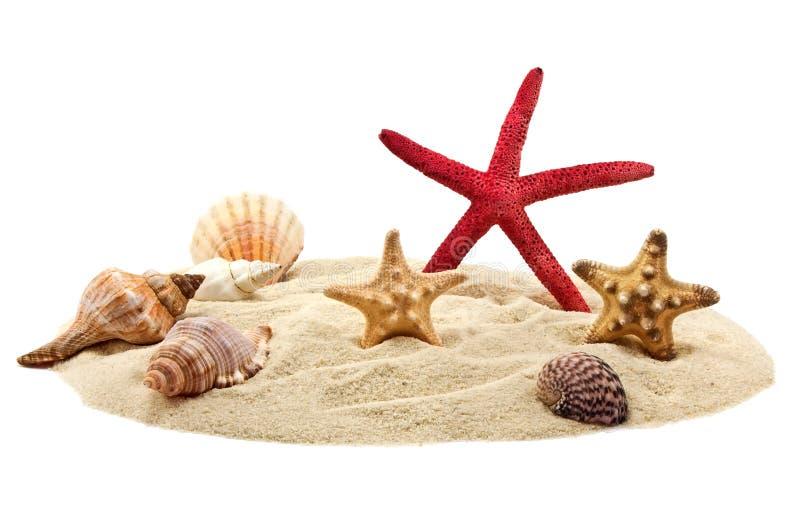 Seashells and starfish on pile of sand stock photos