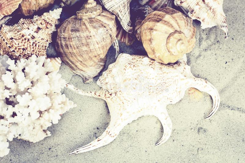 Seashells, stones and sea stars on the sand, summer beach background travel concept with copy space for text stock photos