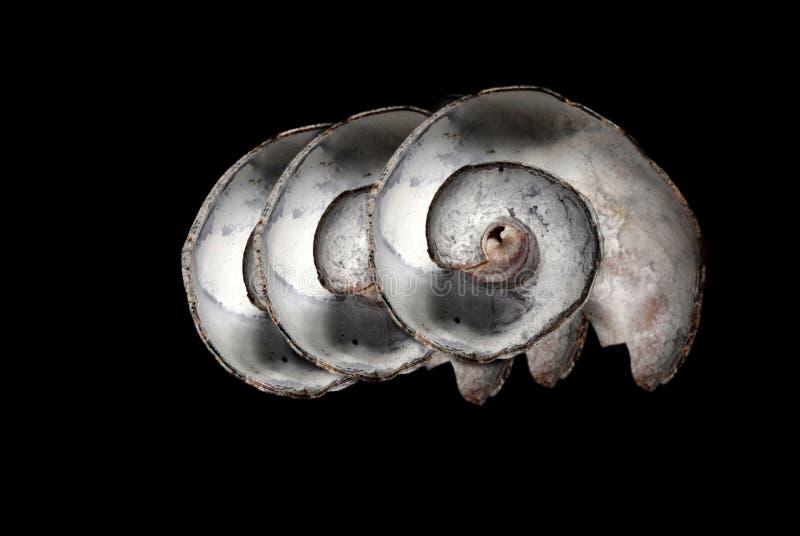 Seashells sul nero fotografia stock