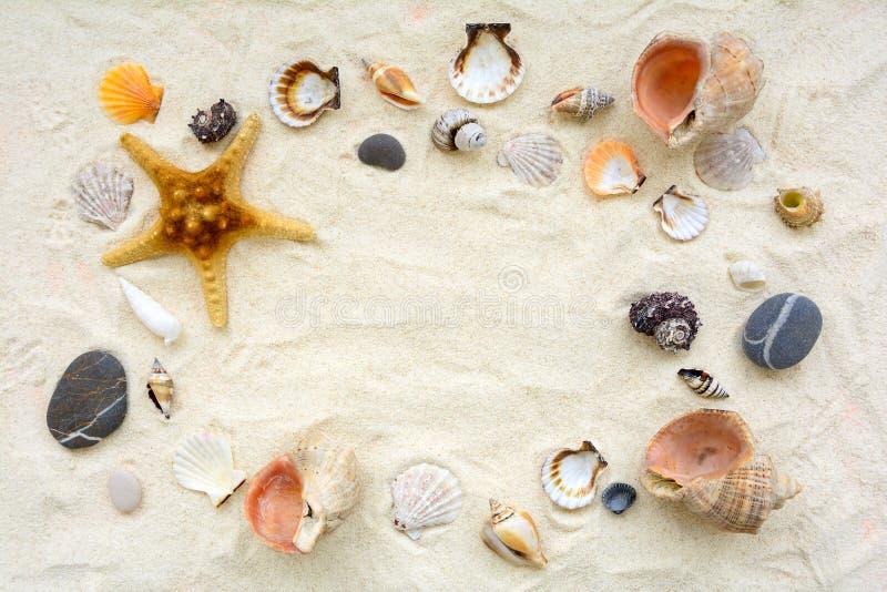 Seashells sulla sabbia Fondo di vacanze estive del mare Vista superiore Copi lo spazio immagine stock