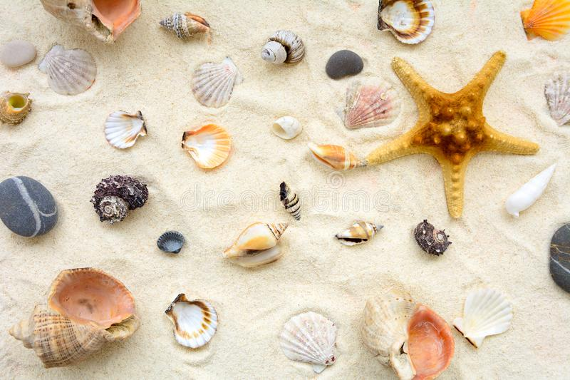 Seashells sulla sabbia Fondo di vacanze estive del mare Vista superiore Copi lo spazio immagini stock libere da diritti