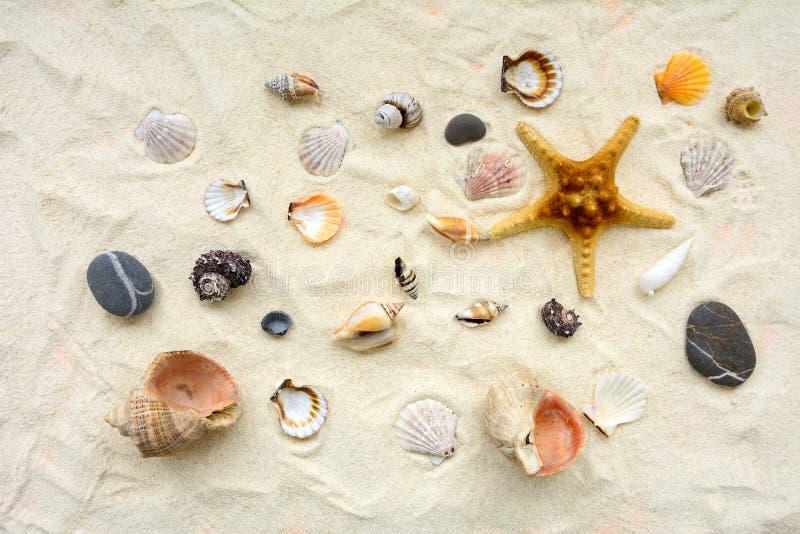 Seashells sulla sabbia Fondo di vacanze estive del mare Vista superiore Copi lo spazio fotografia stock