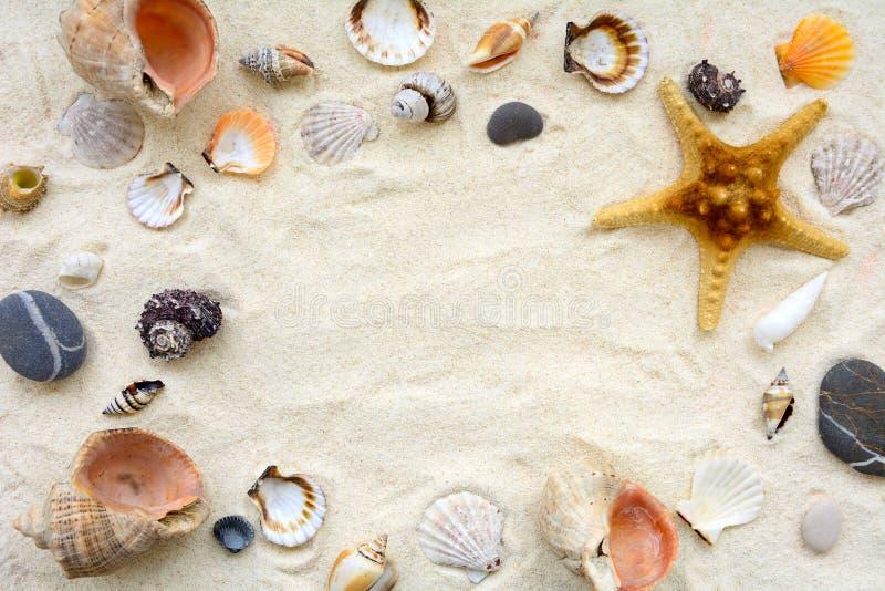 Seashells sulla sabbia Fondo di vacanze estive del mare Vista superiore Copi lo spazio fotografie stock