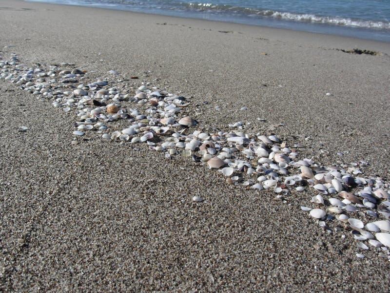 Seashells sulla sabbia Priorità bassa della spiaggia di estate Vista superiore immagine stock