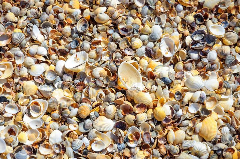 Seashells on a summer beach and sand as background. s stock image