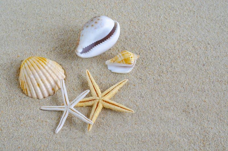 Seashells sur le sable image stock