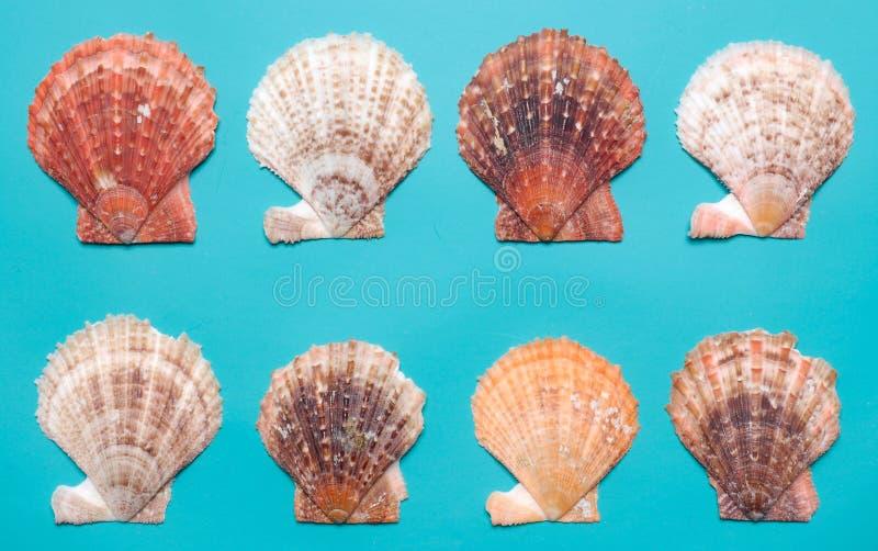 Seashells On Turquoise Background Stock Images