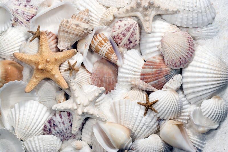 Seashells u. Starfish lizenzfreie stockbilder