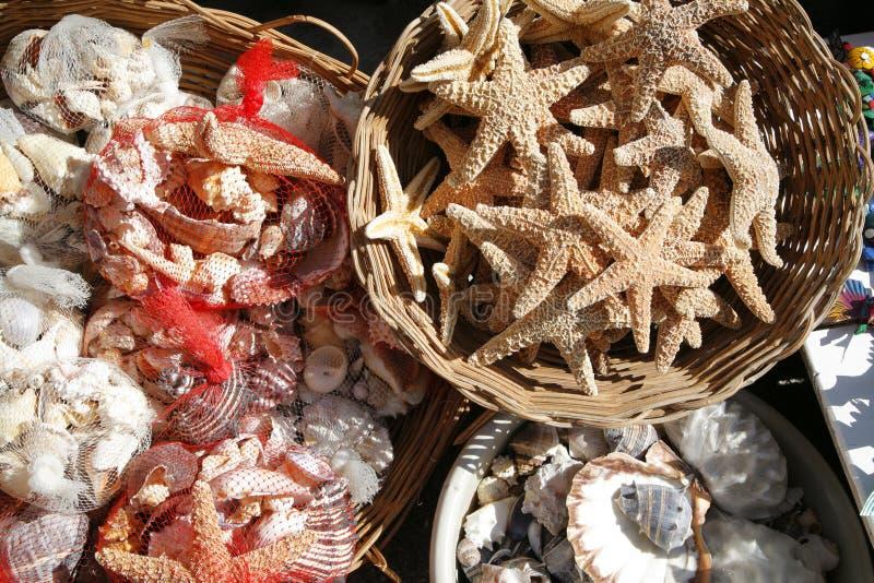 Seashells und Starfish stockfoto