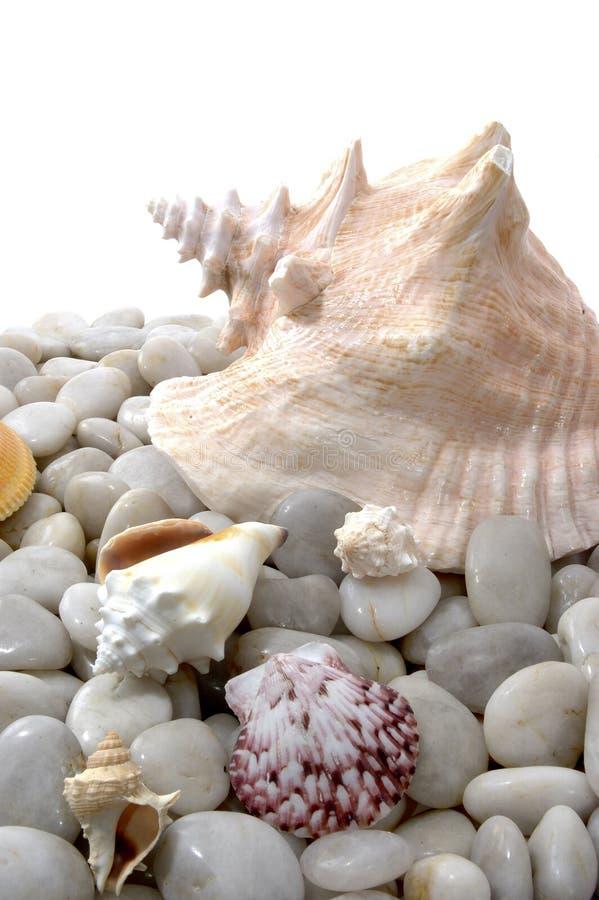 Seashells und weiße Steine lizenzfreies stockfoto