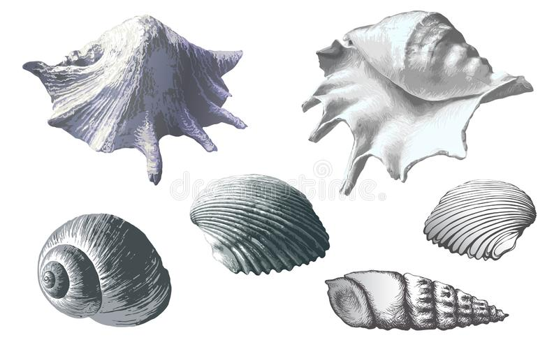 seashells ustawiaj?cy Wektorowa r?ka rysuj?ca ilustracja royalty ilustracja