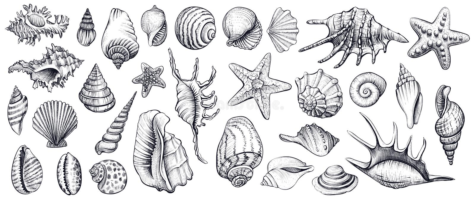 Seashells vector set. Hand drawn illustrations. royalty free illustration