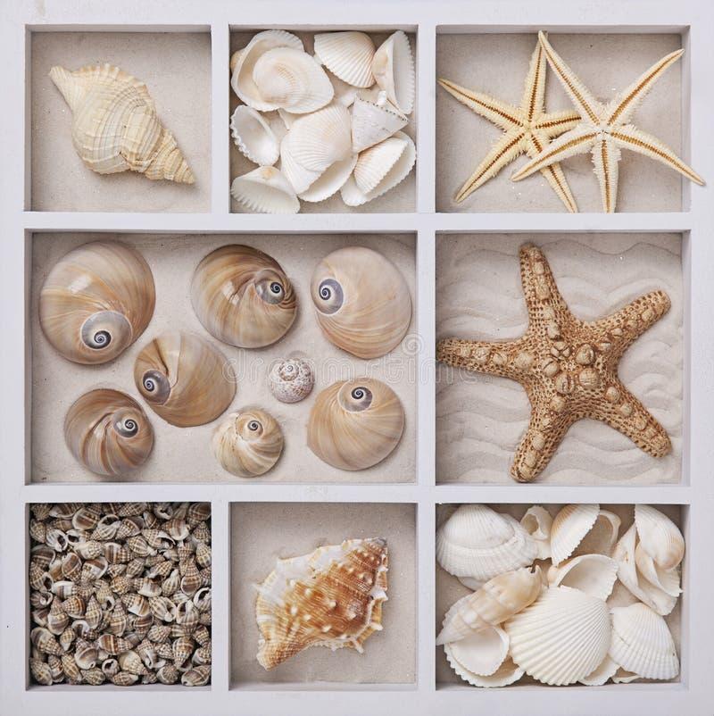 Seashells w białym pudełku zdjęcia royalty free