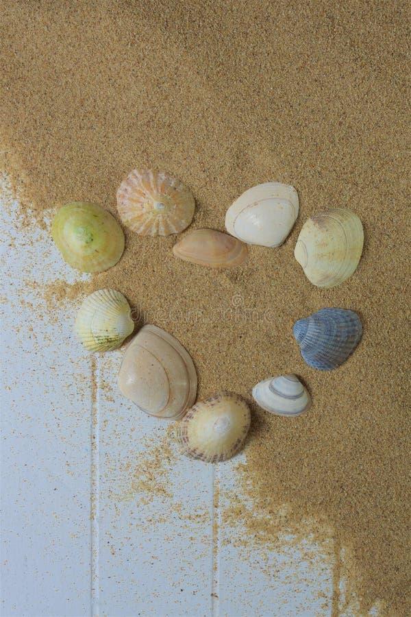 Seashells w kierowym kształcie obrazy royalty free