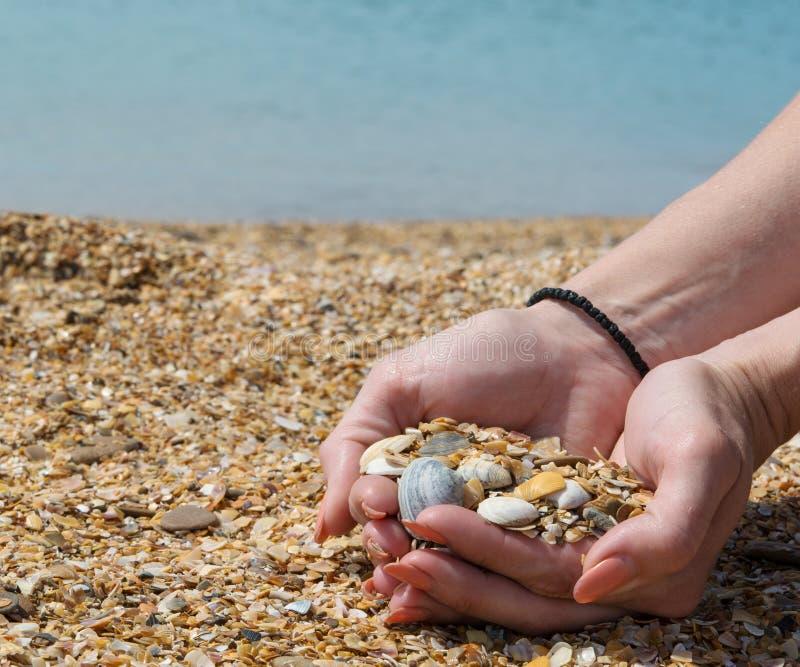 seashells w kształcie obrazy royalty free