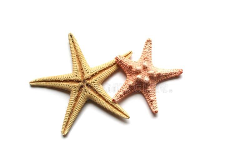 Seashells on white background. Seashells from holiday on white background stock photo